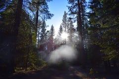 Деревья в озере шевер стоковые изображения rf