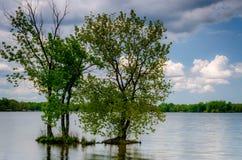 Деревья в озере стоковые фотографии rf