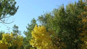 Деревья в осени на предпосылке голубого неба акции видеоматериалы
