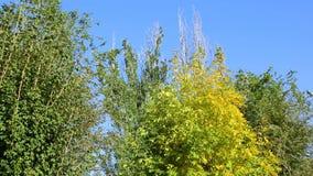 Деревья в осени на предпосылке голубого неба видеоматериал