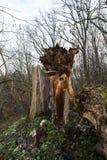 Деревья в осени Стоковое Изображение RF