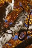 Деревья в осени стоковое фото