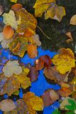 Деревья в осени стоковые изображения