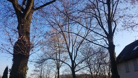 Деревья в осени Стоковая Фотография