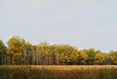 Деревья в одной строке Осень Стоковые Фото