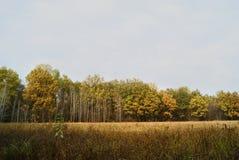 Деревья в одной строке Осень Стоковые Изображения