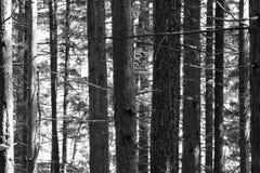 Деревья вдоль побережья США Вашингтона Стоковые Фото