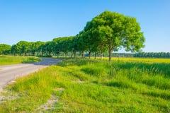 Деревья вдоль поля в солнечном свете Стоковые Фотографии RF