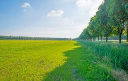 Деревья вдоль поля в солнечном свете Стоковая Фотография