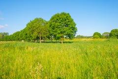 Деревья вдоль поля в солнечном свете Стоковые Изображения RF