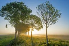 Деревья вдоль поля на восходе солнца Стоковое фото RF