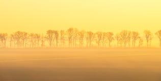 Деревья вдоль поля на восходе солнца Стоковые Фото