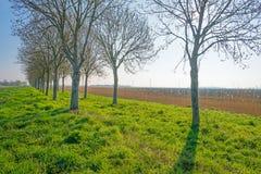 Деревья вдоль поля на восходе солнца Стоковые Изображения RF