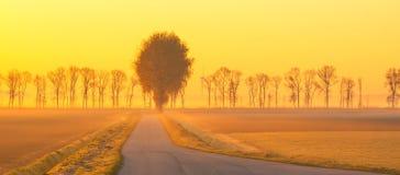 Деревья вдоль поля на восходе солнца Стоковое Изображение RF