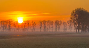 Деревья вдоль поля на восходе солнца Стоковое Изображение
