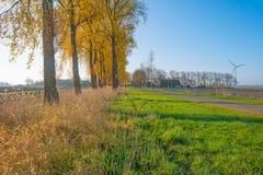 Деревья вдоль поля на восходе солнца Стоковая Фотография