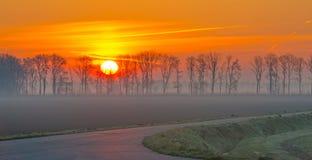 Деревья вдоль поля на восходе солнца Стоковое Фото