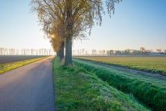Деревья вдоль поля на восходе солнца Стоковая Фотография RF