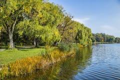 Деревья вдоль пруда Стоковые Изображения
