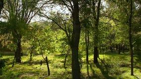 Деревья в парке в осени видеоматериал