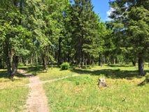 Деревья в парке города Стоковые Фотографии RF