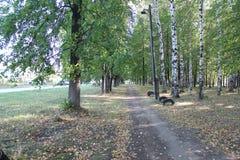 Деревья в парке города Стоковое Изображение