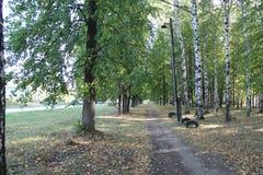 Деревья в парке города Стоковое Изображение RF