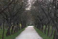 Деревья в парке дальше больше шарлаха Стоковая Фотография RF