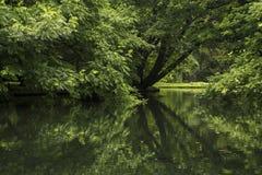 Деревья в парке отраженном в пруде стоковые фото