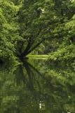 Деревья в парке отраженном в пруде стоковые изображения rf
