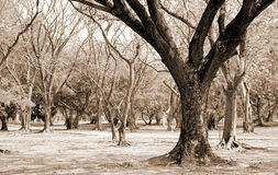 Деревья в парке Стоковое Изображение