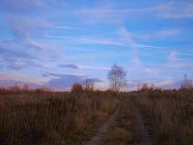 Деревья в поле в последней осени стоковое фото rf