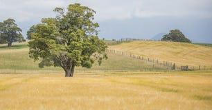 Деревья в поле Стоковая Фотография RF