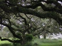Деревья в поле Стоковые Изображения