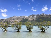 Деревья в предпосылке горы и неба озера стоковое фото