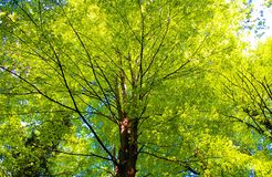 Деревья в пути леса Стоковые Фотографии RF