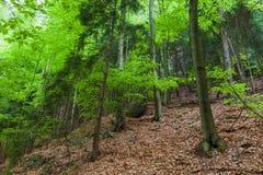 Деревья в пуще Стоковое Фото