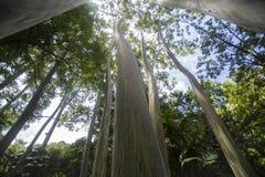 Деревья в пуще Стоковые Фотографии RF