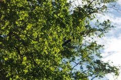 Деревья в пуще Стоковое Изображение