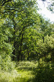 Деревья в пуще стоковые изображения rf
