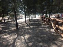 Деревья в пляже Стоковые Фотографии RF