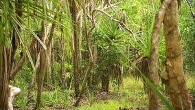 Деревья в районе леса видеоматериал