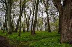 Деревья в расчистке в древесинах Стоковые Изображения RF