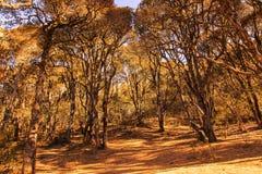 Деревья в древесинах Стоковое Изображение