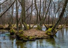 Деревья в реке Стоковая Фотография RF