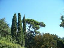 Деревья в саде дворца Vorontsov Стоковое Фото