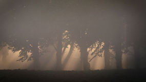 Деревья в свете утра Стоковые Изображения RF