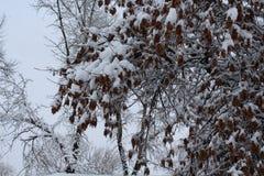 Деревья в снежке Зимние месяцы Зима Snowy холодно стоковые изображения rf