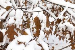 Деревья в снежке Стоковое Изображение