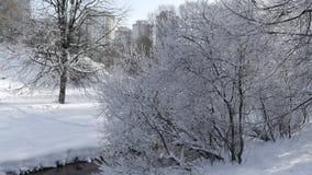 Деревья в снежке Стоковая Фотография RF